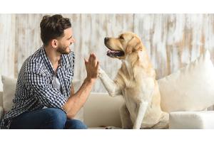 Was denkst du gerade? - Verhaltensmedizin bei Tieren