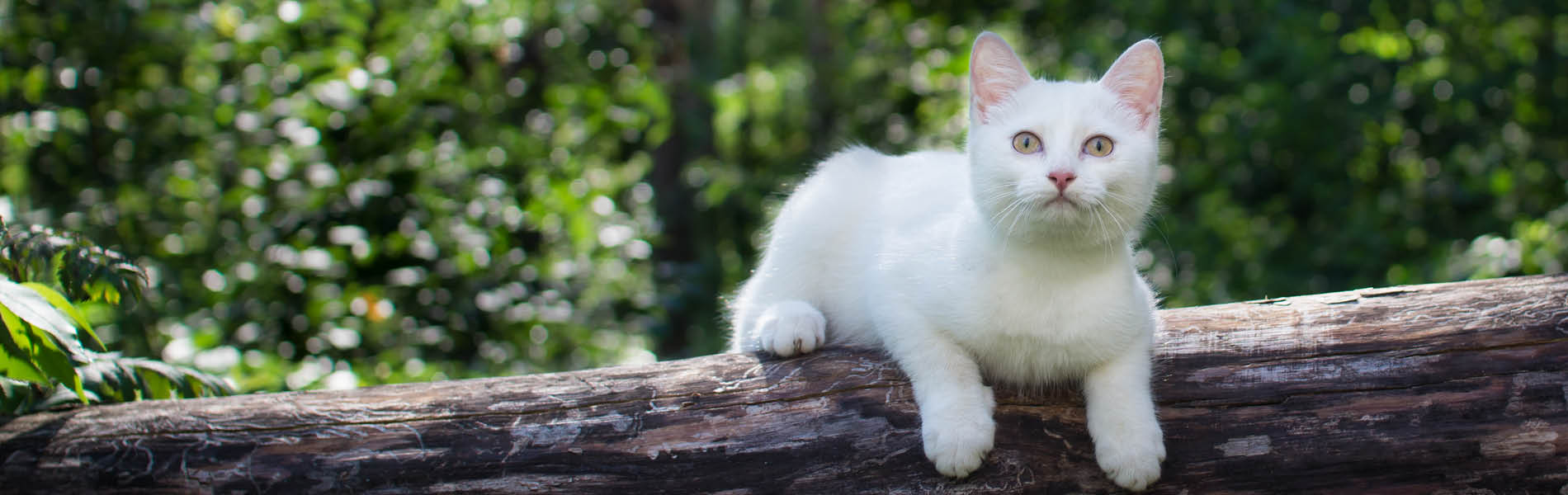 Protection antiparasites pour chats 5
