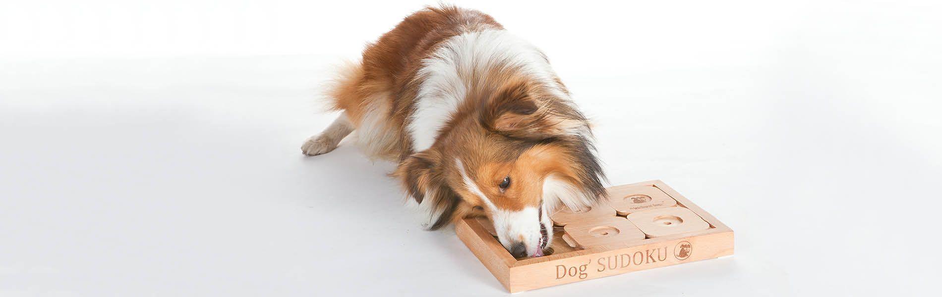 Hunde Intelligenz Liste