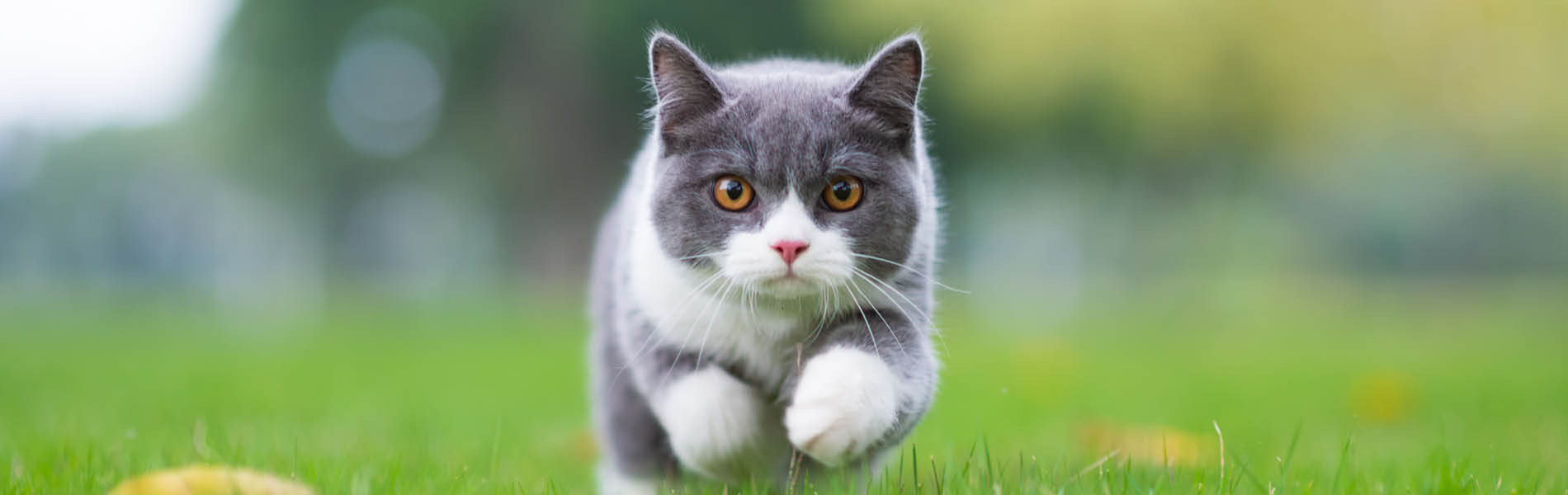 Protection antiparasites pour chats 3