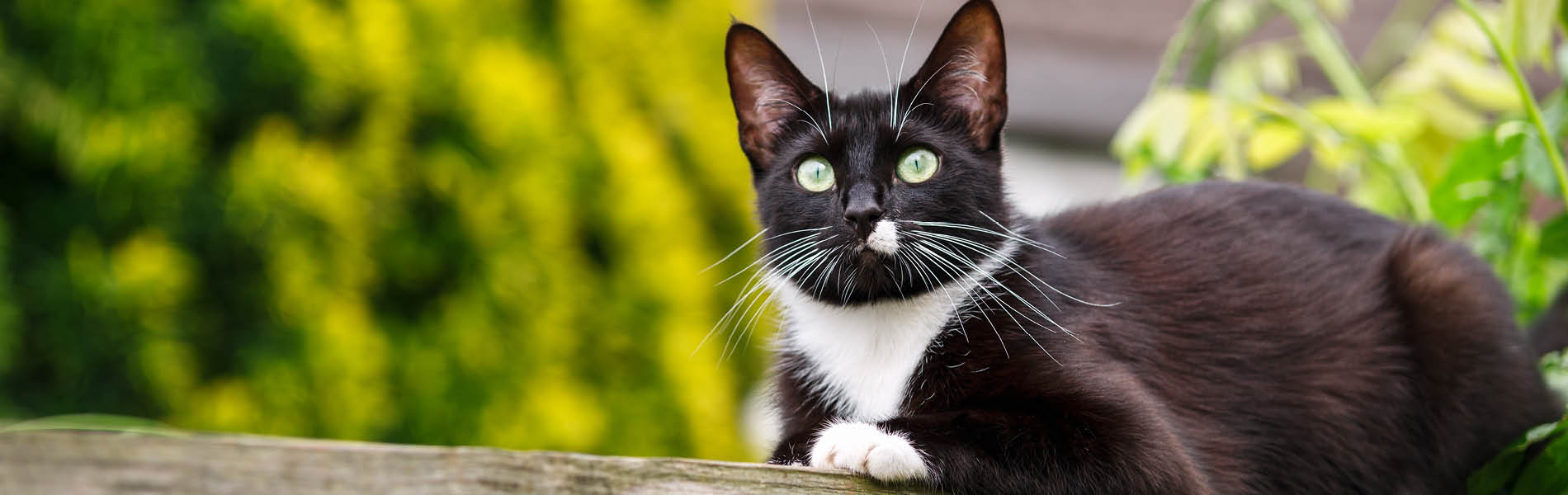 Protection antiparasites pour chats 1