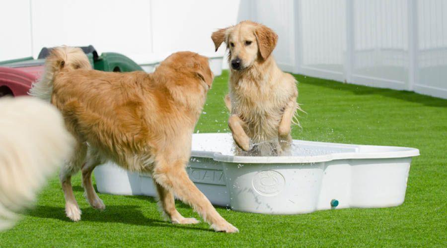 Pools & Wasserfontäne