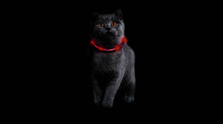 Katzen in der Dunkelheit