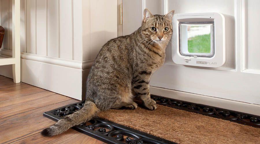 Katzentüren & Schutznetze