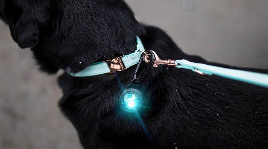 Leuchtanhänger & -Halsbänder