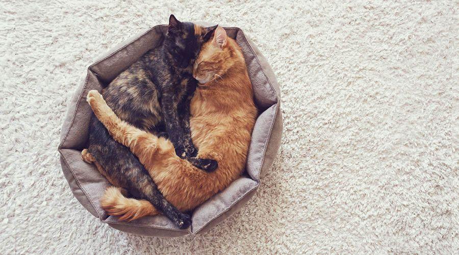 Schlafplätze
