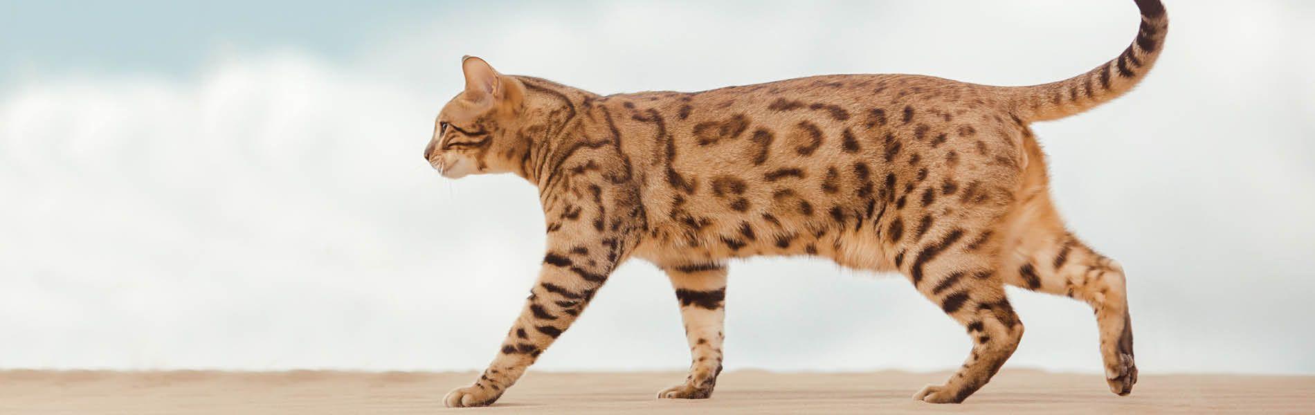 Katzenwelt 1
