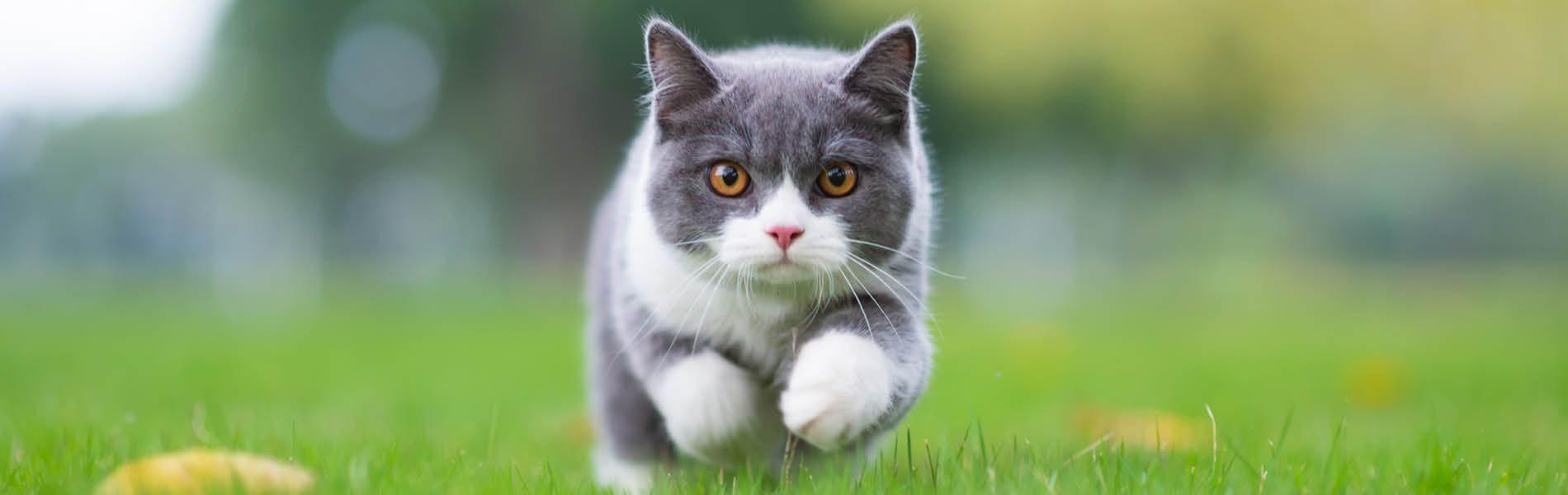 Katzenwelt 3