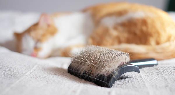 Büsis richtige Pflege - eine saubere Sache