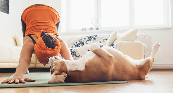 Fitness für den Hund