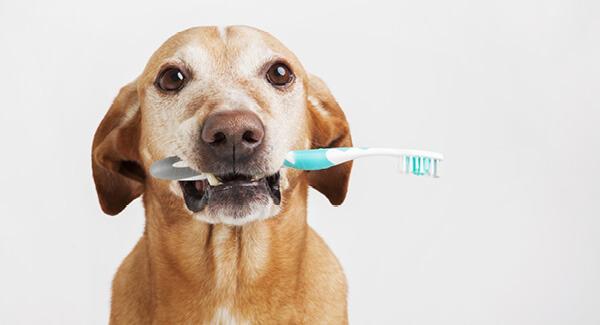Gesunde Zähne ohne Stress