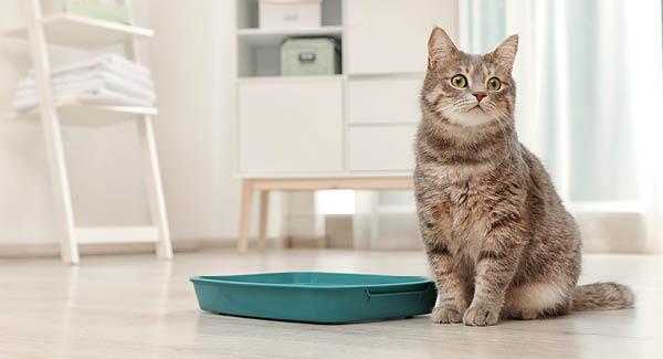 Harnabsatzstörungen bei Katzen