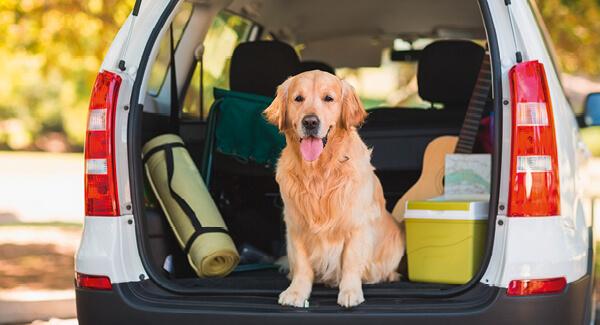 Hund & Auto – Gute Reise mit dem Hund