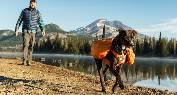 Mit dem Hunderucksack auf Wandertour