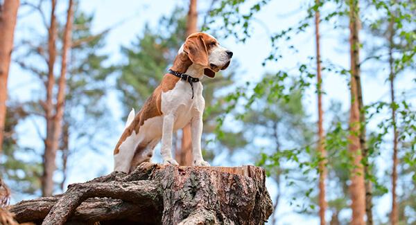 Das Jagdverhalten – Herausforderung für jeden Hundehalter