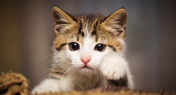 Katzenkinder – Körperliche Entwicklung und Sozialisation