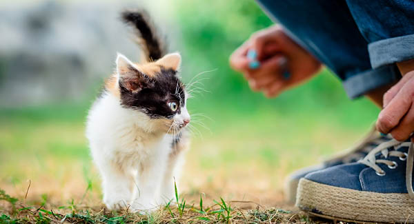 Checkliste – Ein Kätzchen zieht ein
