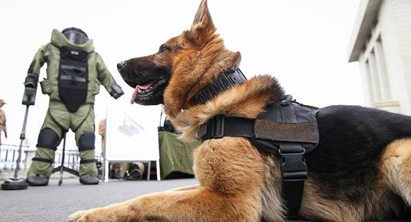 Bombastisch – Sprengstoffhunde im heiklen Einsatz