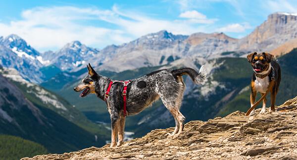 Meikos Wanderspass für Mensch und Hund