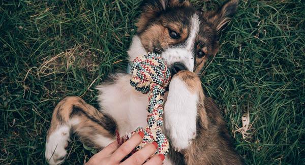 Spielen mit dem Hund – Lust und Frust