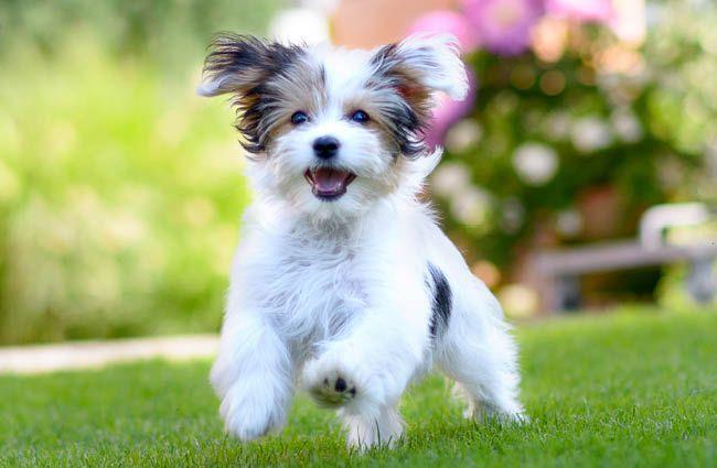 MEIKO Teaser Kategorie Hunde