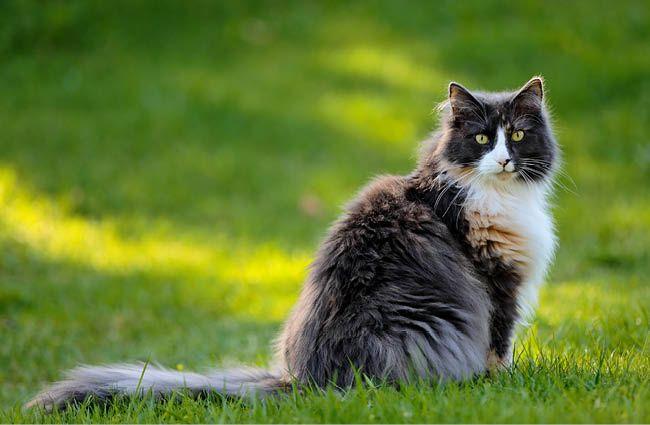 MEIKO Teaser Kategorie Katzen