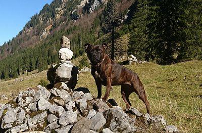 Hunde von Claudia
