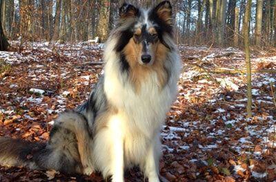 Hund von Sabine