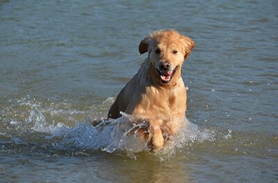 Hund von Christine